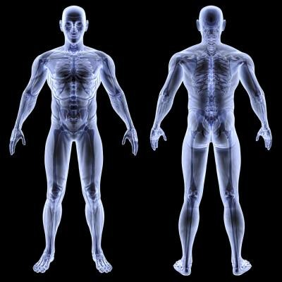 Front and back 3D rendering of the human body.