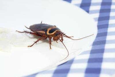 how to keep roaches away from house