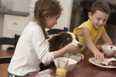 Dog trying to eat children's food