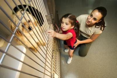 Mother and daughter looking at dog in shelter.