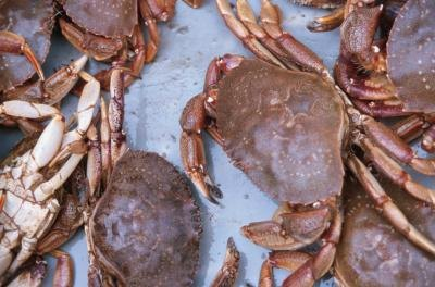 Shellfish will last up to three days