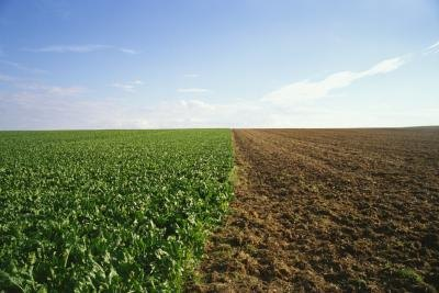 Agriculture is the main industry of the South