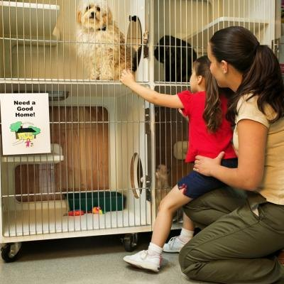 List of jobs to work with animals?