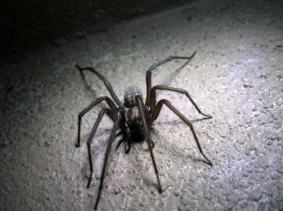 Spider found in garage