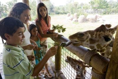 children feeding giraffe at zoo