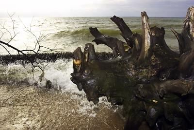 Damage Caused to the Ecosystem by Tsunamis