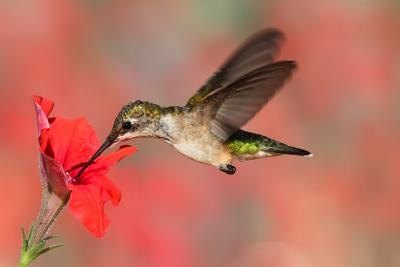 Hummingbirds suffer from the destruction of their habitat.