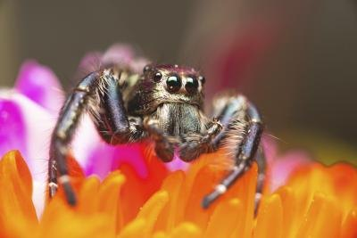 Jumping spider on top of flowers
