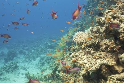 the main characteristics of coral reefs Physical characteristics of coral reefs march 22, 2013 coral animals can be found in several parts of the ocean, but the reef-building types only live in places that meet a narrow range of environmental conditions.
