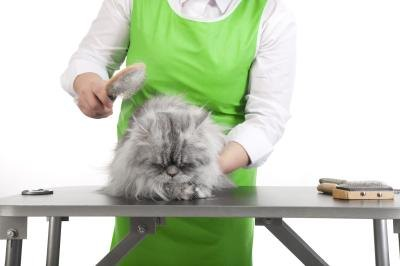 Cat Food Recipes For Hairball Problems