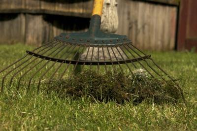 A close-up of a garden rake collecting moss in the grass.
