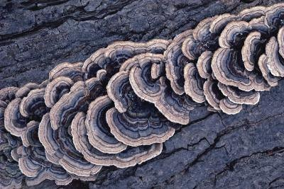 A close-up of fungus growing on tree bark.