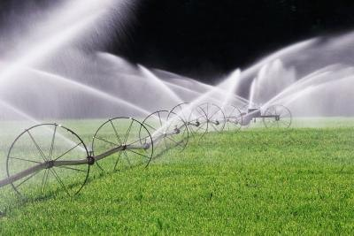 Use a rain gauge to determine how much irrigation your lawn is getting.
