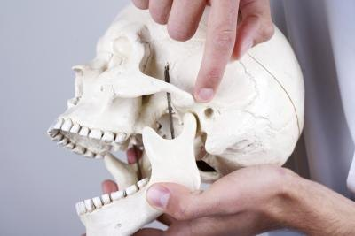 Doctor showing the temporomandibular joint.