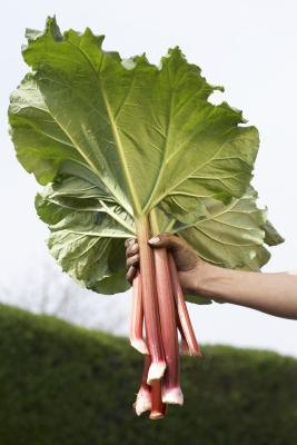 Rhubarb is among the top food sources of oxalate.