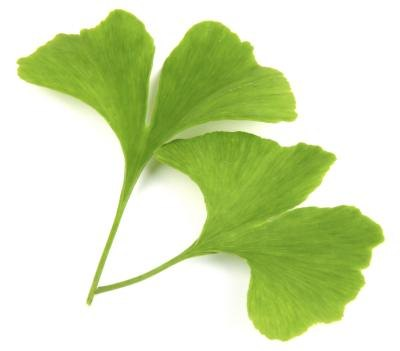 Ginko Biloba can assist as an herbal remedy.