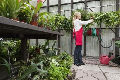 Inquire about plant foods at a nursery.