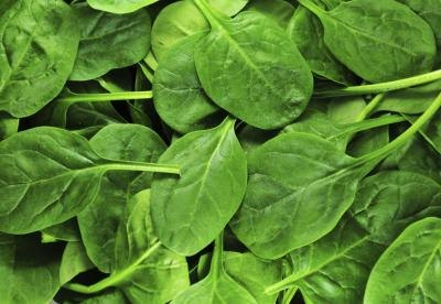 Close-up of fresh spinach leaves.