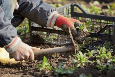 A gardener will replace dead plants and keep the flower bed weed-free.