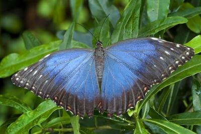 butterflies and other insects make up the bulk of rain forest species