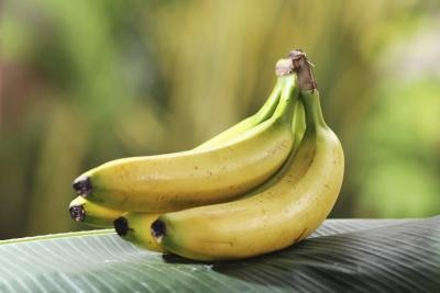 The ethylene gas released by the banana or apple will speed the ripening of the pears.