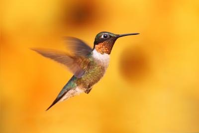 Hummingbirds are the smallest types of birds.