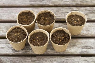 Seeds are divided into six cups on a table.
