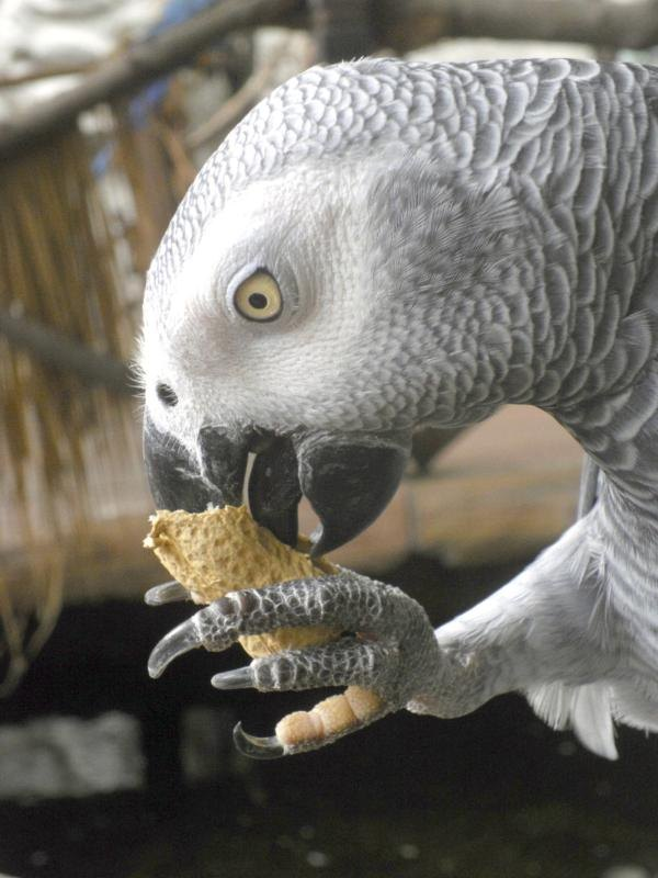A well-balanced diet is key to your parrot's health.