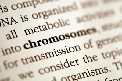The gene is connected to the chromosome, and the chromosome is connected to the egg and sperm.