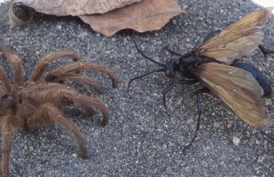 Flying ants can be as big as a tarantula or very small.