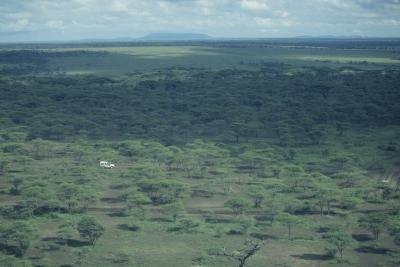The Serengeti is an example of a savanna.