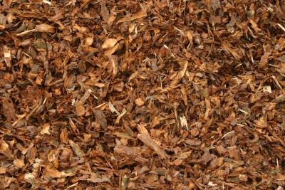 A close-up of mulch.
