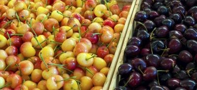 There are many different varieties of cherries.