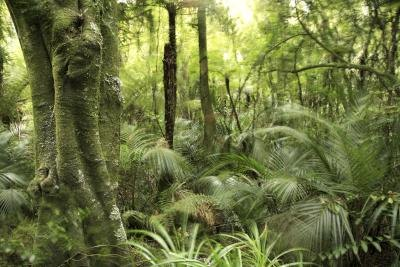 Palms and ferns grow on the rainforest floor.