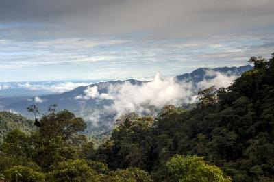 The Amazon's climate is humid and provides an average of 80 inches of rainfall.