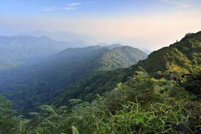 A tropical rainforest in the mountains of Southeast Asia.