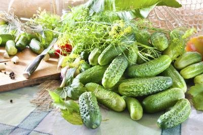 A heap of fresh picked garden cucumbers piled on the counter near a cutting board with a knife.