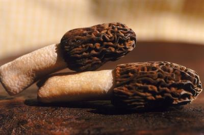 Morels are one type of edible mushroom found in Tennessee.