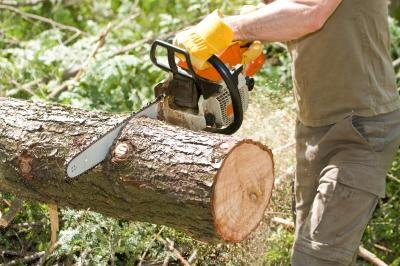 how to get rid of trees with worldedit