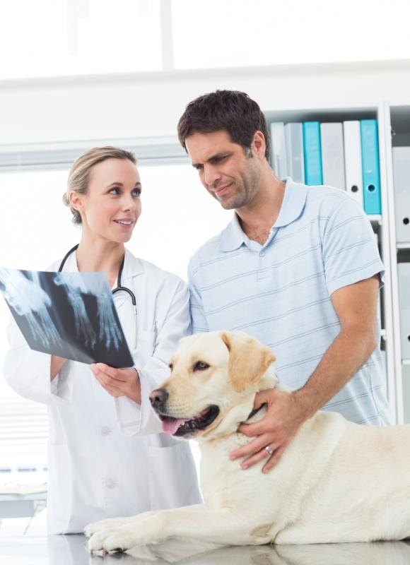Your vet diagnoses gallbladder issues via X-rays and ultrasounds.