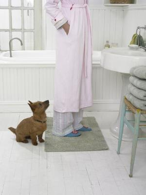 Giving pets treats in a bathroom creates crumbs that attract beetles.