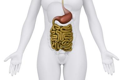 3D rendering of human intestines.