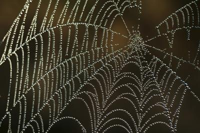 Spiders spin webs from silk they produce.