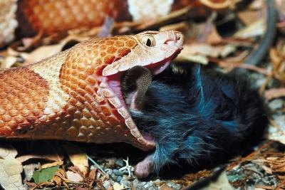 Snakes help control rodent populations.