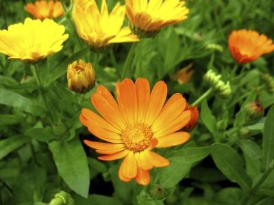 Perennial Flowers That Bloom From Spring To Fall Ehow