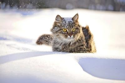 Animals experience grave danger during blizzards.