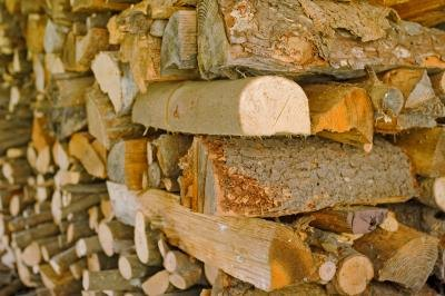 Dry firewood stored inside of a shed.