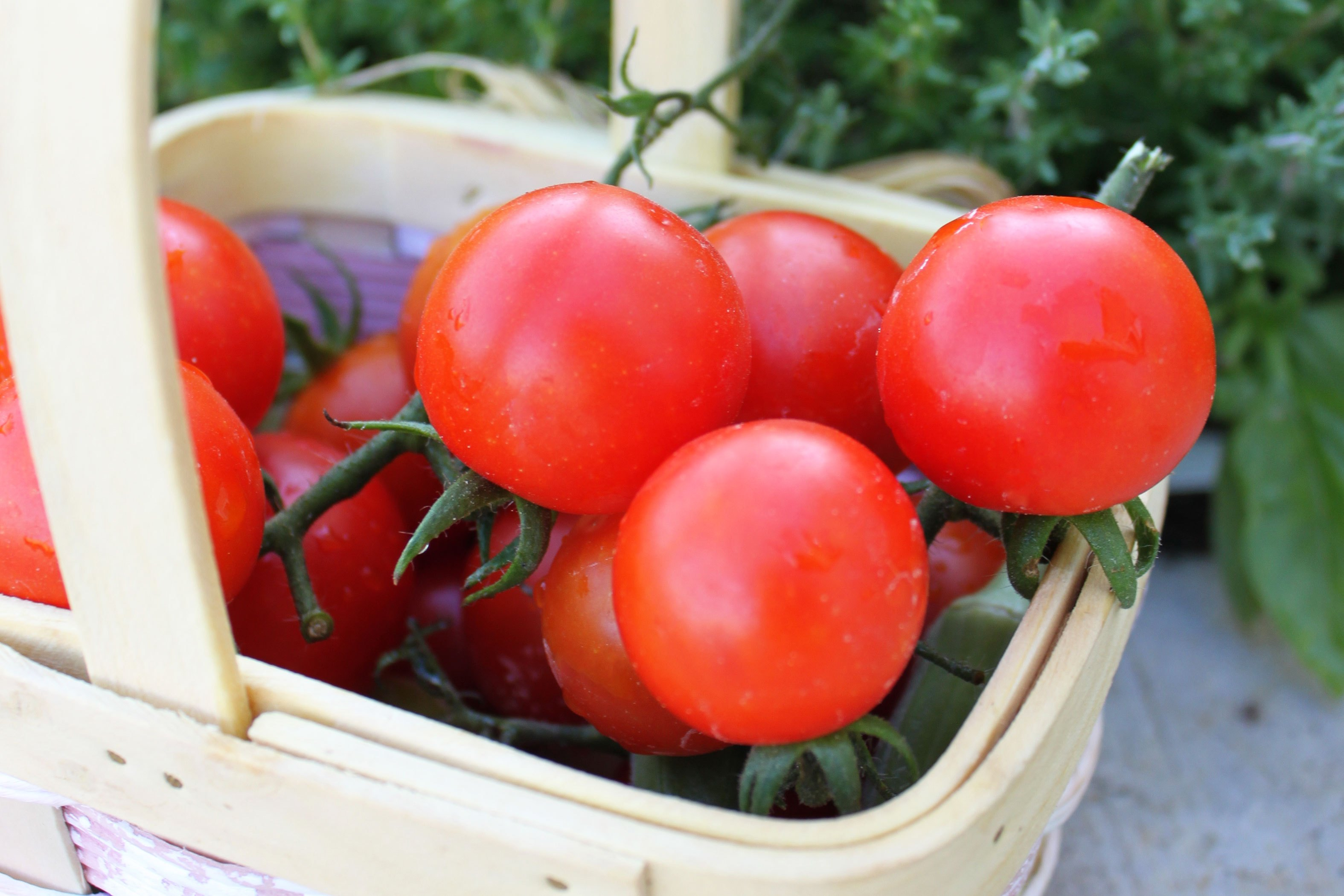 Growing Herbs Indoors From Seeds How To Grow Sweet 100 Cherry Tomatoes With Pictures Ehow