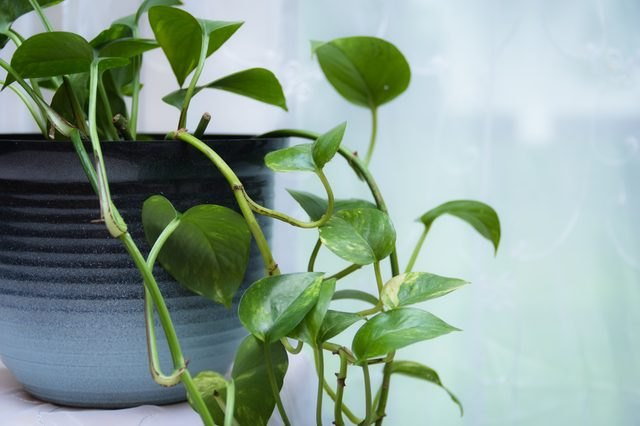 Which Houseplants Are Best For Cleaning The Air Ehow