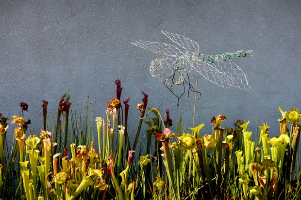 The chicken-wire dragonfly sculpture at home in the garden.
